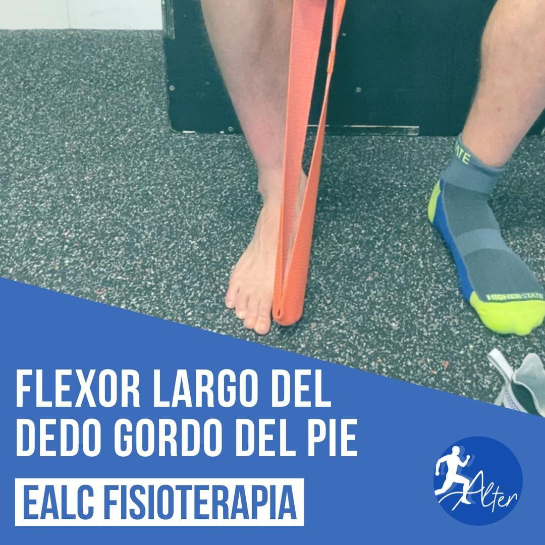 Imagen Flexor largo del dedo gordo del pie